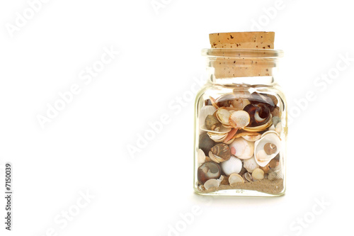 canvas print picture Muschelglas
