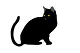 Gato negro poster