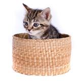 chat chaton panier solitude seul triste amitié compagnie poster