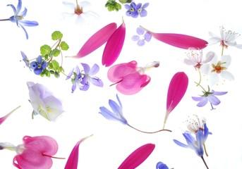 petals background