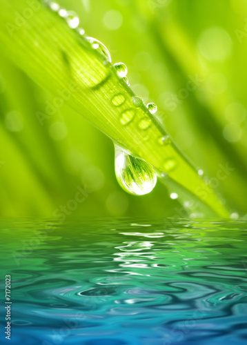 Morning dew on a green grass reflected in rendered water - 7172023