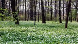 forest with white flowers