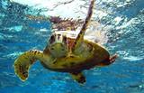 sea turtle - 7207090