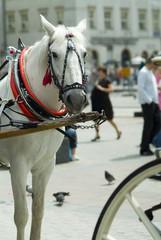 Do horses think?