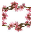 frame from pink peach flowers