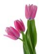 Fototapete Blume - Pflanze - Blume