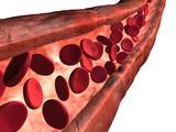 Blood vein poster