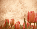 Grungy tulip stationery poster