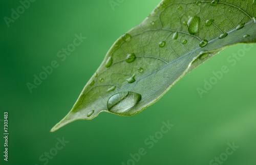 Leinwanddruck Bild rain drop