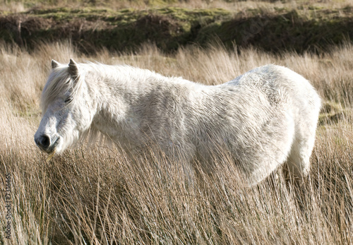 Fototapeten,pferd,pony,mähne,wild horse