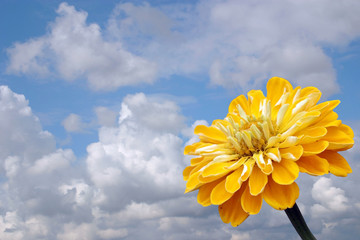 Yellow flower on a background of the cloudy sky.