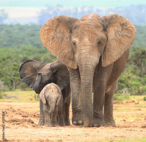 Elephant cow and two calves in different expressions.