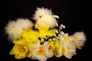 Daffodil Cuties