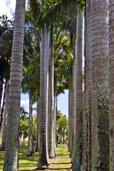 Row of Palms