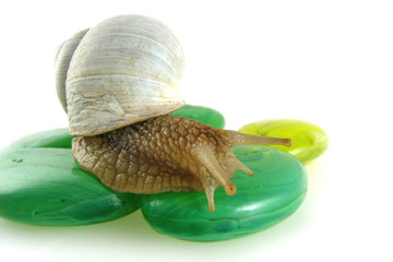 snail on green stones