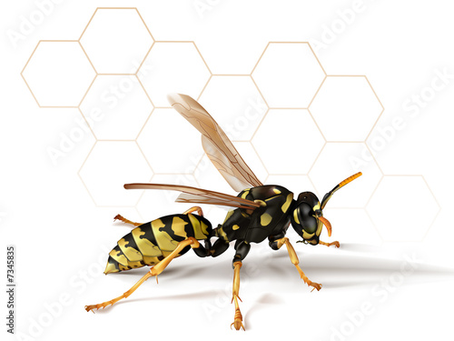 Paper Wasp with Abstract Background