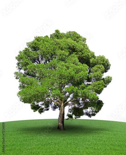 arbre sur prairie