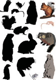 different rodents poster
