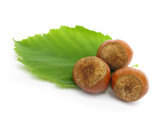 Hazelnuts with leaves poster