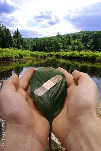human hands holding bandaged leaf.