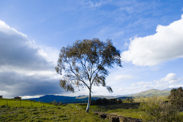 landscape for a lonely tree