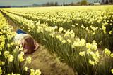 romance in a flower field poster