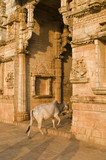 Holy Cow Entering Hindu Temple poster