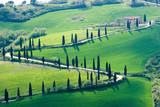 Fototapety tuscany green nature