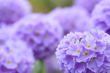 flower bloom garden