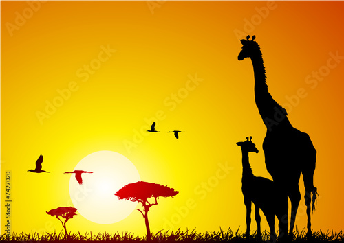 Leinwanddruck Bild Giraffe and pup at sunset