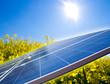 Raps und Solar