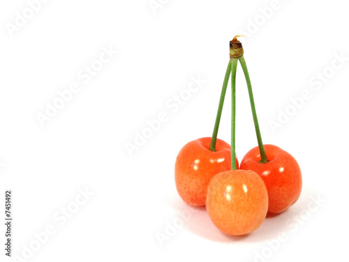 Three sweet cherries isolated