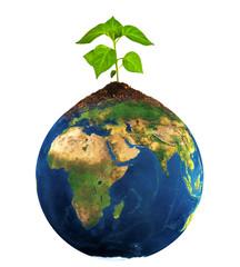 plant grow on earth