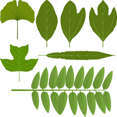 Vector leaves - gingko, sassafras, poplar, locust and willow