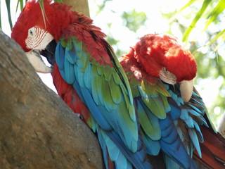 Parrot headache