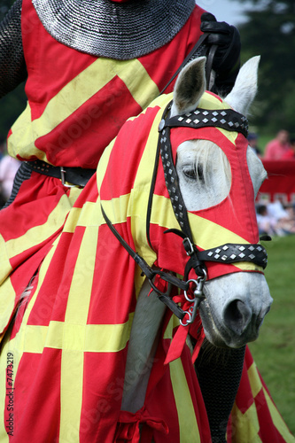 Knights horse
