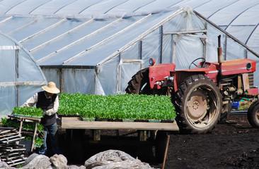 Farm worker preparing new plants