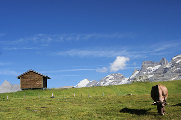 Swiss alpine farm