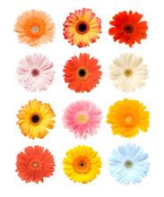 "Постер, картина, фотообои ""Colorful Gerbera"""