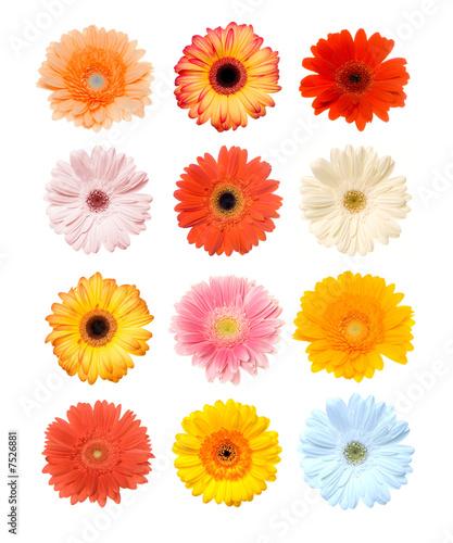 Tuinposter Gerbera Colorful Gerbera