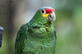 Smart Parrot poster