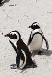 Juhoafrická Pinguin