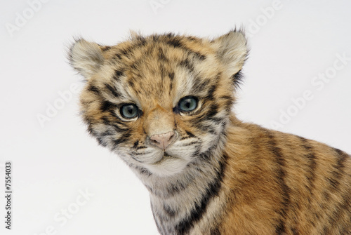 Tigerbaby, Portrait