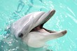 Leinwandbild Motiv Dolphin in Blue Water