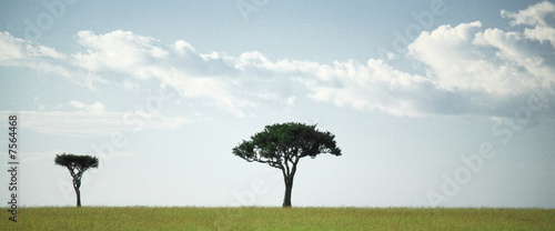 Panoramic view of two trees