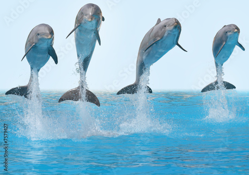Tuinposter Dolfijn Delphine springen