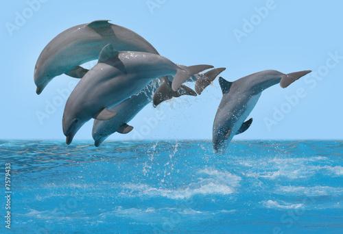 Foto op Canvas Dolfijn Delphine springen