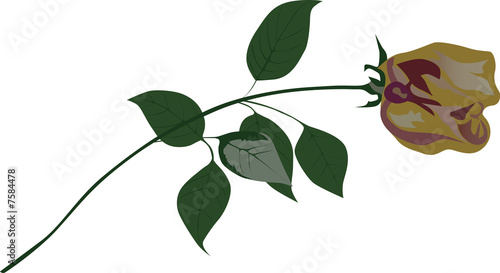 yellow rose flower illustration