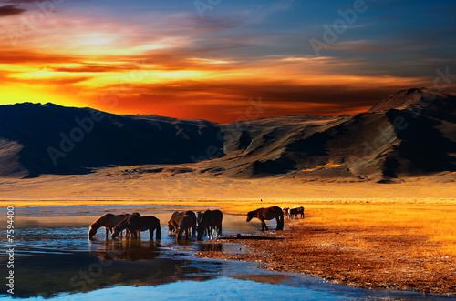 Fototapeten,pferd,trinken,mongolei,see