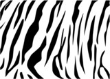 Vector -tiger texture Black and White